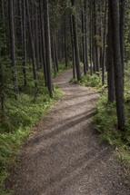 path through an evergreen forest