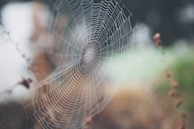 Close up of spider web.
