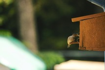 Bird feeding in a birdhouse.