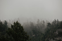 misty mountain top and forest