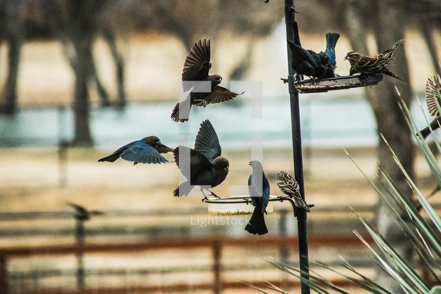 birds fighting for spots at the bird feeder