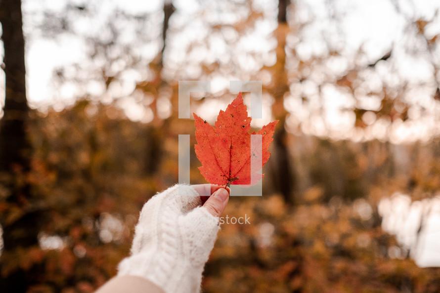 a woman holding up an autumn leaf