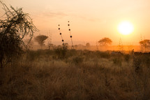 sunset over the savanna