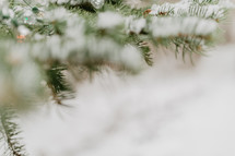 abstract focused boughs with snow