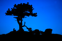 silhouette of a tree against a blue background