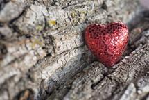 red heart on bark