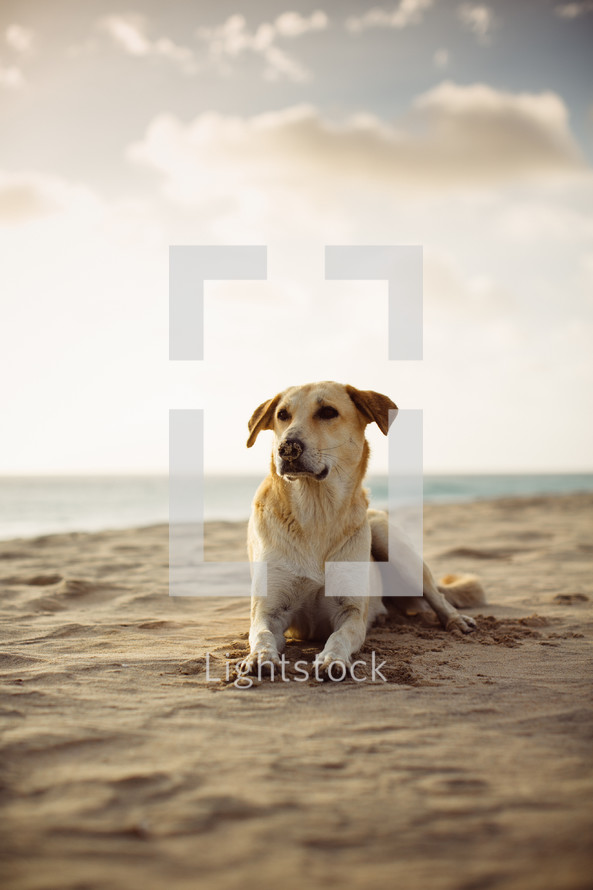 a dog resting in the sand