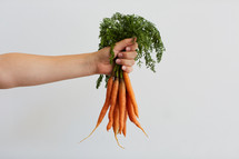 arm holding out bunch of carrots