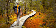 A backpack traveler on an adventure to hike a winding path through a forest.