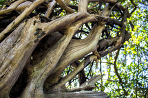 twisted branches of driftwood