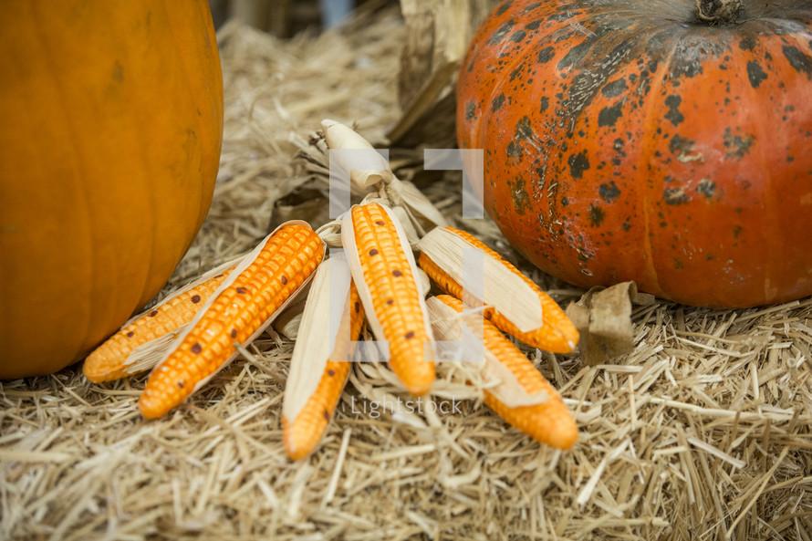 corn and pumpkins in hay