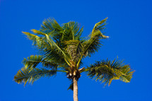 looking up to the top of a palm tree and blue sky