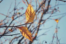 new leaves on a barren tree