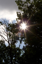 sunburst through tree branches