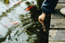 a child looking into a koi pond