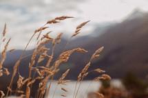 sea oats on a shore