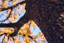 bark on a fall tree