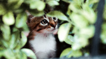 kitten hiding in a bush