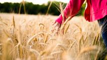 a hand touching wheat grains