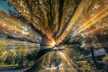 Brilliant rays of sun through tree branches.