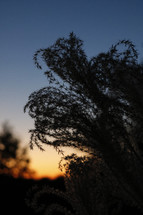 plant silhouette at sunset