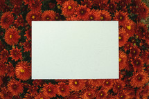 blank notecard on red mums