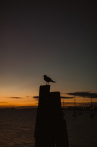 silhouette of a seagull at night