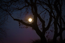 full moon through silhouettes of trees