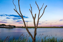 branches of a bare tree near a lake