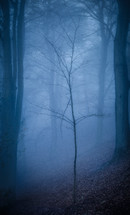 bare tree in a foggy forest