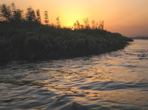 tall grasses along the shore of the Nile River at sunset