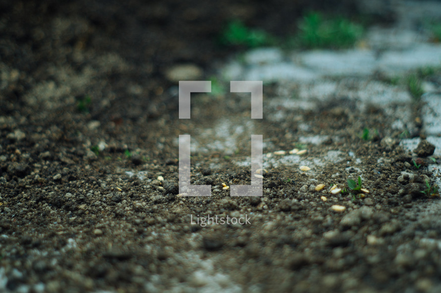 seeds on soil