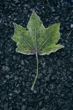 Frosty leaf on black asphalt stone.