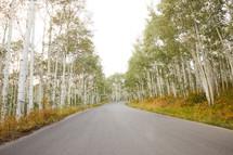 road through an aspen forest