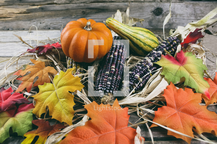fall leaves, corn, pumpkins, and gourds