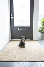 puppy sitting in front of a door