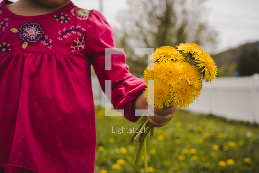 toddler girl holding picked yellow flowers