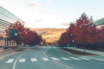 fall trees lining a downtown road