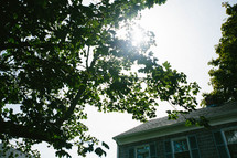 sunlight on tree branches and roof of a house