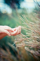 Child's hands in a wheat field.