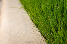 grass along the edge of a sidewalk