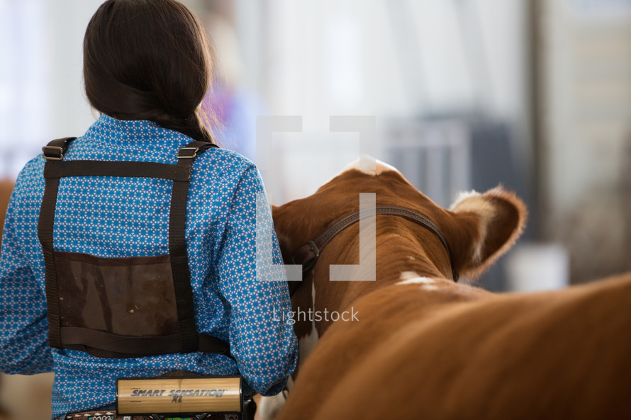 a cowgirl next to a steer or heifer preparing for livestock competition