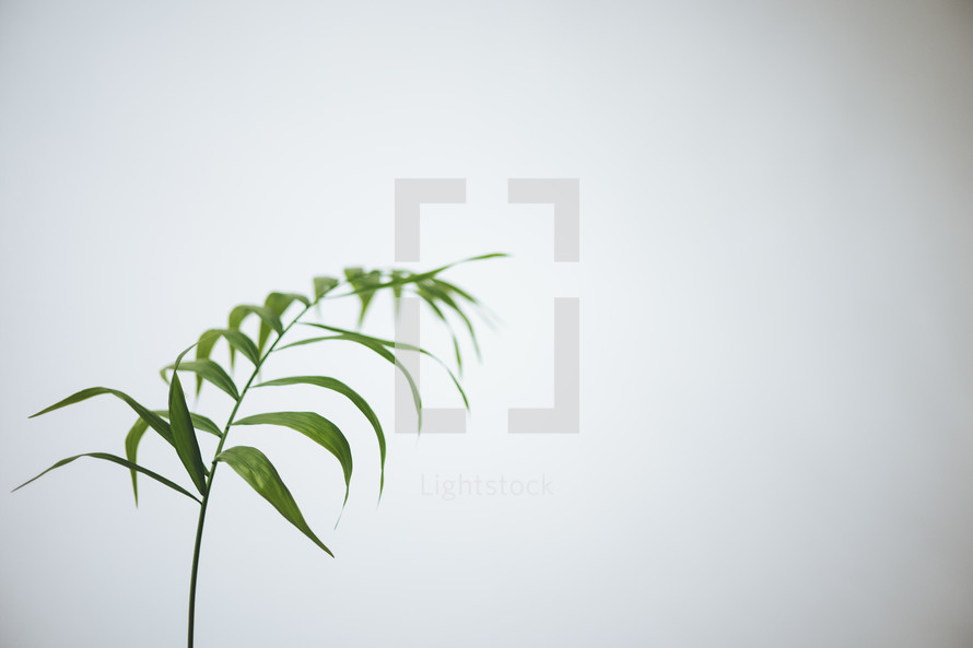 plant leaves against a white background