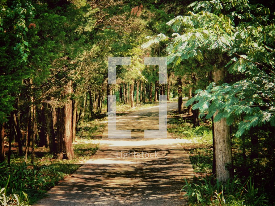 Tree-lined trail.