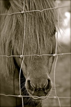 horse looking through fence wire