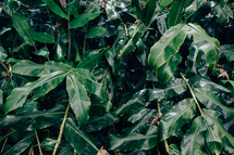 green leaves in a jungle