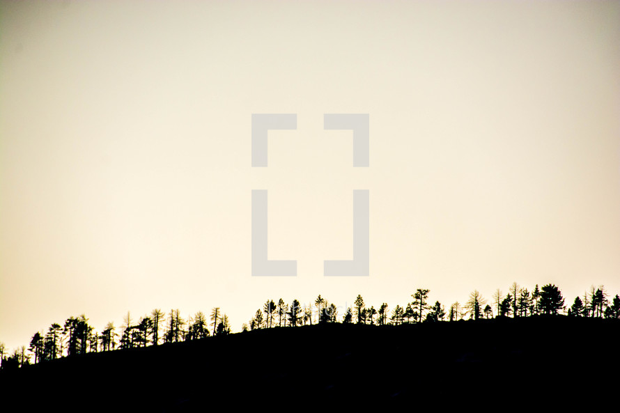 tree line on a mountain top