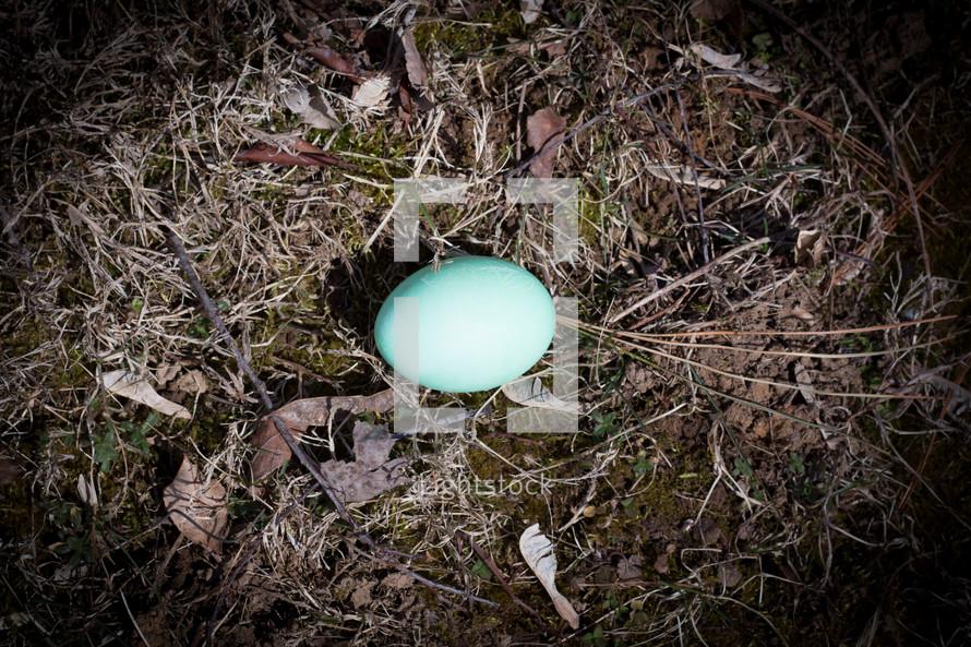 blue birds egg
