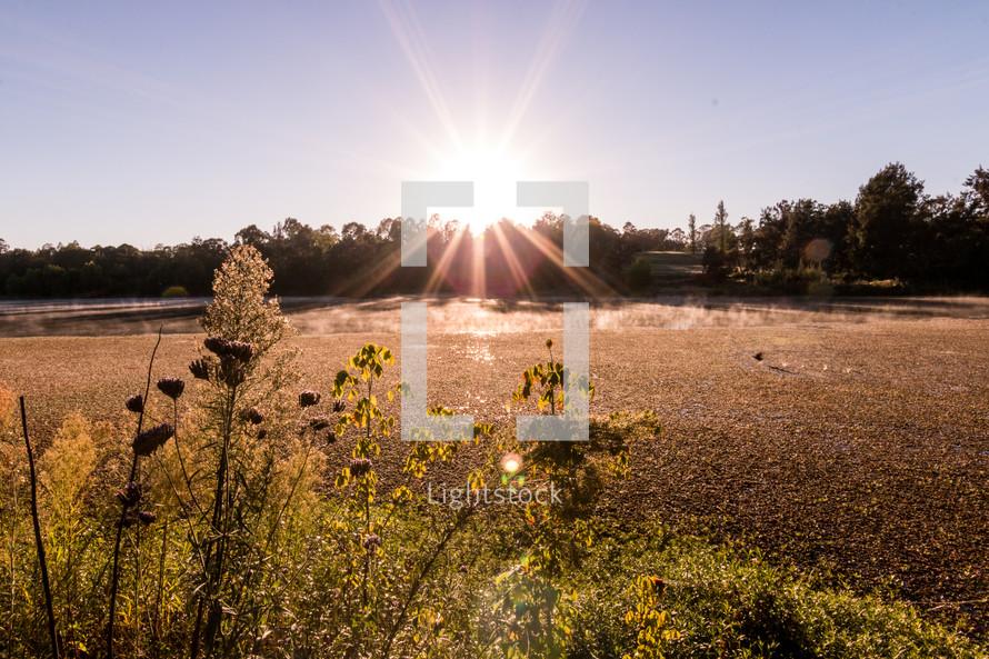 sunburst over a golden field