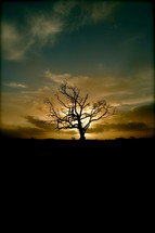 silhouette of a solo barren tree